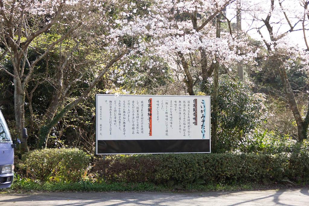 龍水亭 桜 2