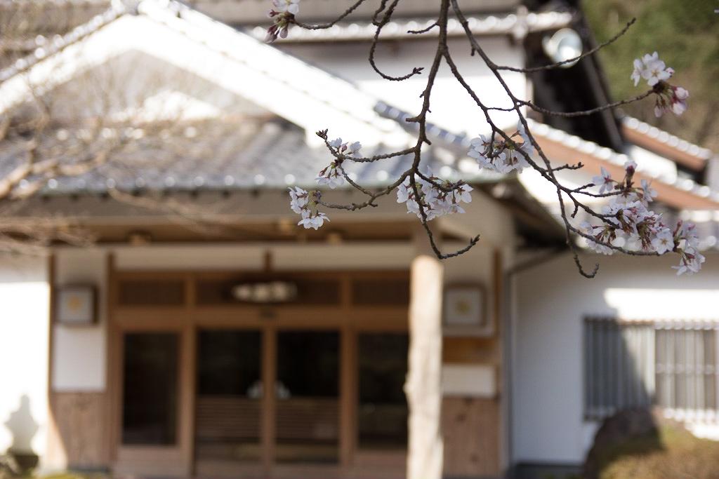 龍水亭 玄関 桜